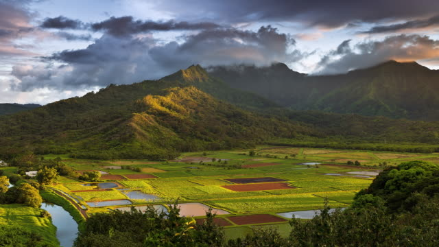 T/L The sun is setting on the taro fields of Hanalei Valley