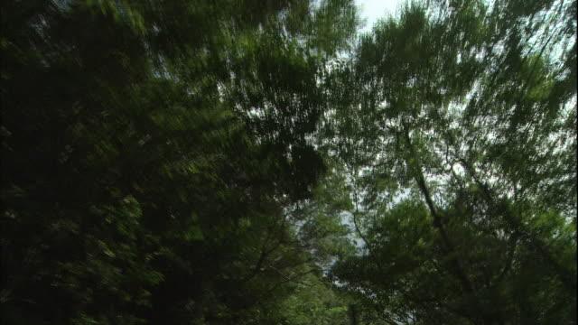 The sun peeks through lush tree branches.