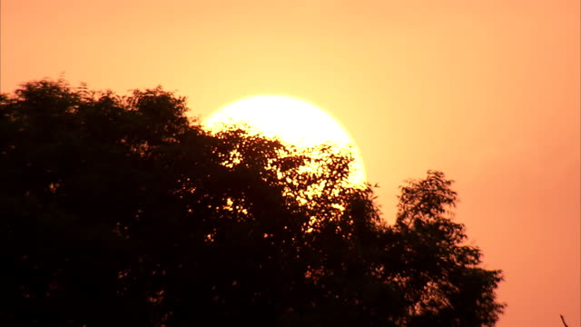 the sun rises behind a tree in agra, india. available in hd - sunrise dawn stock videos & royalty-free footage