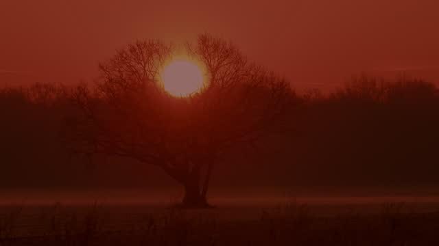 vídeos de stock, filmes e b-roll de ls o sol nasce atrás de uma árvore - astronomia