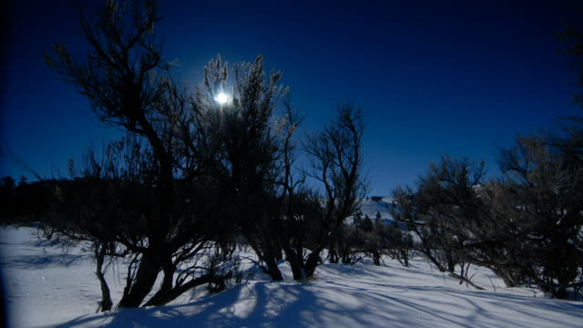 the sun rises over trees in a snow-covered landscape. - yellowstone national park stock videos & royalty-free footage
