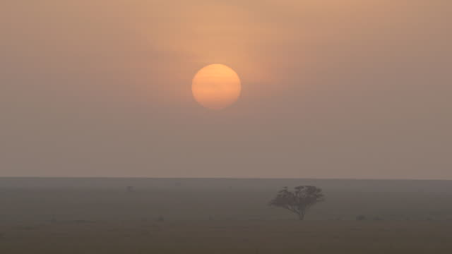the sun rises slowly over the savannah, tanzania. - tanzania stock videos & royalty-free footage