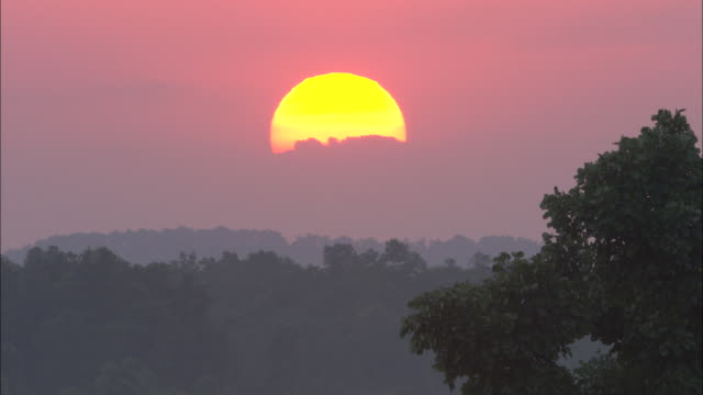 the sun sets behind a forest in pench national park in india. - madhya pradesh stock videos and b-roll footage
