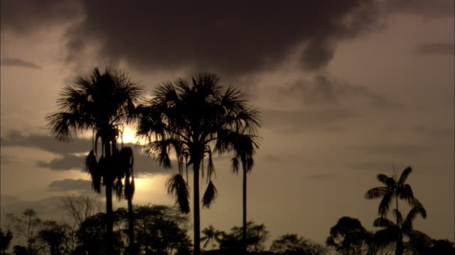 the sun sets behind silhouetted palm trees. - french guiana stock videos & royalty-free footage