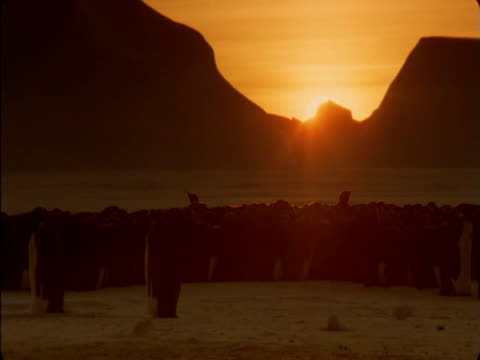 the sun sets on an emperor penguin colony in antarctica. - antarctica sunset stock videos & royalty-free footage