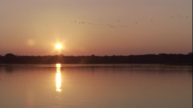 The sun sets on the horizon above a Amazon River shoreline. Available in HD.