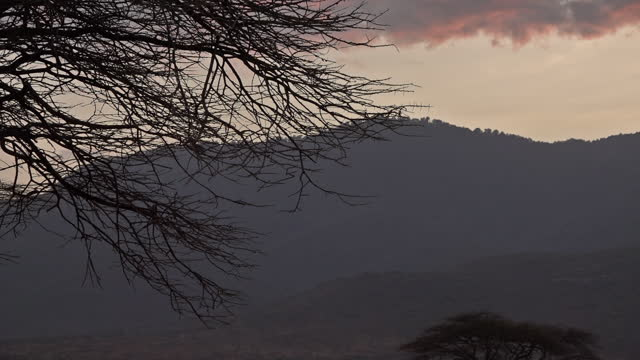 the sun sets on the sandy plains with acacia trees against the view on the mountains in wamba, kenya on july 13, 2019. - tropical tree stock videos & royalty-free footage