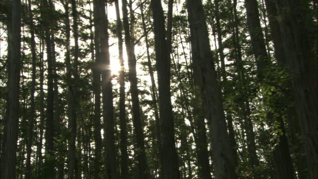 the sun shines behind tall trees in a forest. - オケフェノキー国立野生生物保護区点の映像素材/bロール