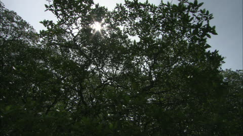 the sun shines brightly above trees growing in murky water. - marsh stock videos & royalty-free footage