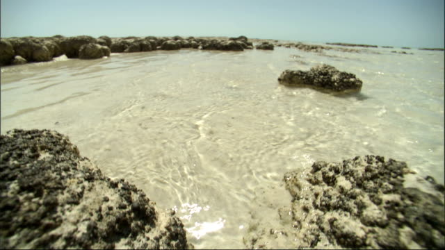The sun shines down on the shallow waters of Shark Bay. Available in HD.