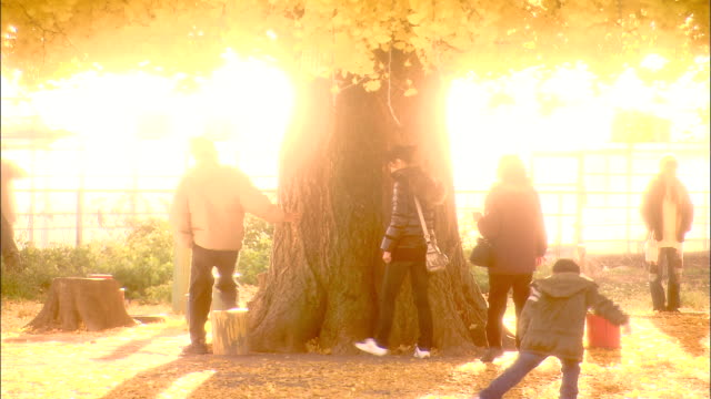 the sun shines over a ginkgo tree as two adults hug the trunk. - tree hugging stock videos & royalty-free footage