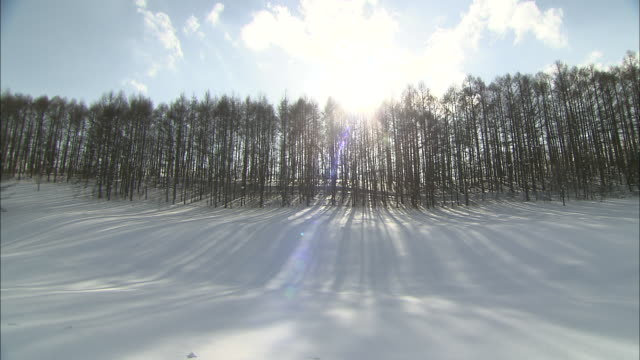 The sun shines over a windbreak forest casting long shadows across the snow.
