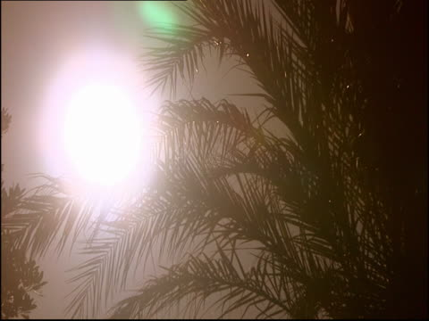 the sun shines through palm fronds at golden hour. - golden hour stock videos & royalty-free footage
