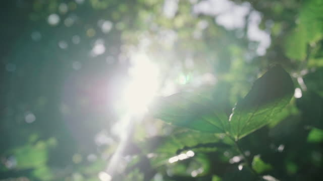 the sun shining through dangling leaves - beech tree stock videos and b-roll footage
