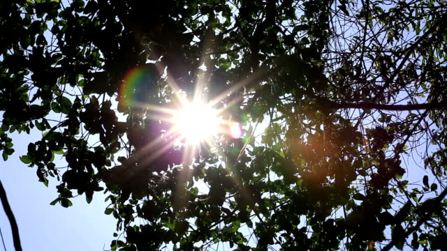 the sun shining through leafs. - looking through an object stock videos & royalty-free footage