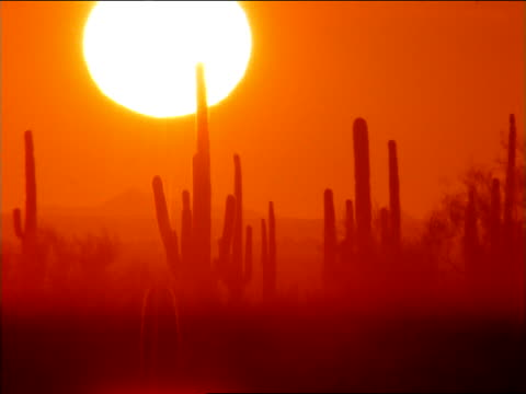the sun silhouettes saguaro cacti and desert mountains. - saguaro cactus stock videos & royalty-free footage