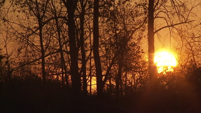 the sun slowly rises behind trees and shrubs. - twilight stock videos & royalty-free footage