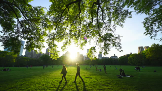 vídeos de stock, filmes e b-roll de the sunset light through the central park west historical district buildings illuminates the fresh green leaves and people on the great lawn in central park at new york city ny usa on may. 08 2019. - lush