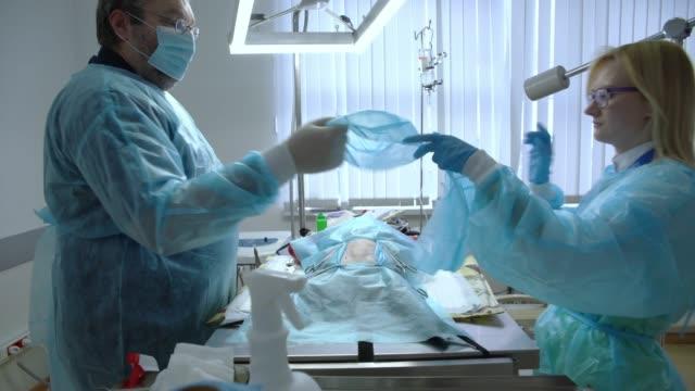 vídeos de stock, filmes e b-roll de a cirurgia na clínica veterinária. a equipe dos dois médicos veterinários, cirurgião, o homem e a mulher, enfermeira, serrar o gato na sala operacional. preparação antes da operação, colocar as máscaras. - máscara de proteção