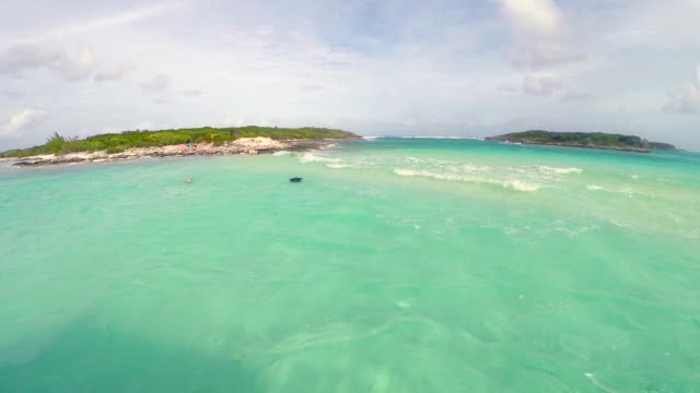 stockvideo's en b-roll-footage met the swimming pigs in caribbean sea - bahama's