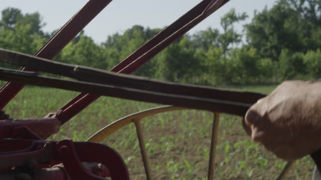 the tanned forearms of a farmer holds the reins on an antique plow as he drives it through a field. - avambraccio video stock e b–roll