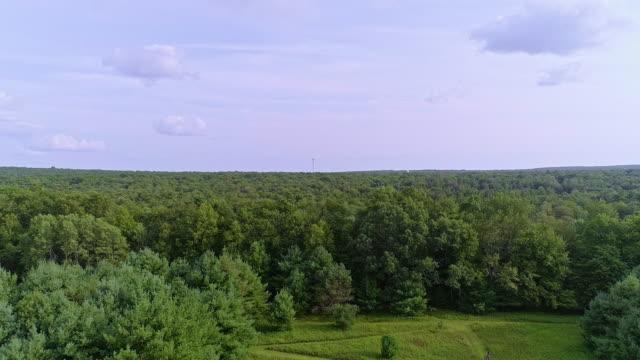 Het tiener meisje herten aan de rand van het bos kijken. Poconos, Pennsylvania, VSA