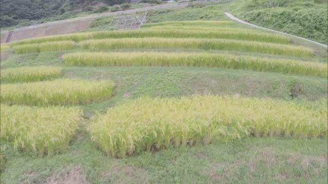 the terraced rice paddies of shirayone - ishikawa prefecture stock videos and b-roll footage