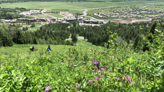 The Teton Village Wildflower Trail to Gondola Summit is a 74 mile lightly trafficked out and back trail located near Teton Village Wyoming that...