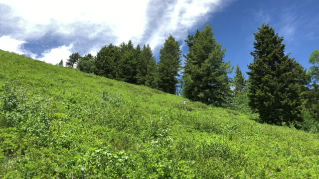 the teton village wildflower trail to gondola summit is a 74 mile lightly trafficked out and back trail located near teton village wyoming that... - マイル点の映像素材/bロール