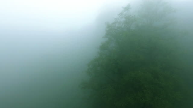 The thick mist of a forrest in the north of Iran.