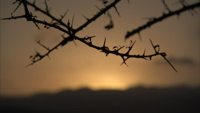 the thorny, bare branches of a tree are silhouetted above a mountainous horizon. - とげのある点の映像素材/bロール