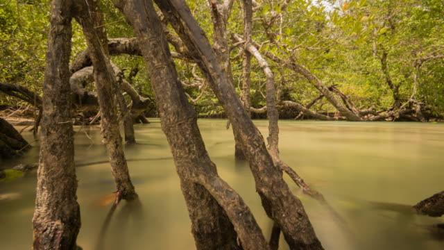 the tide comes in and covers the roots of the mangrove tree - tide stock videos & royalty-free footage
