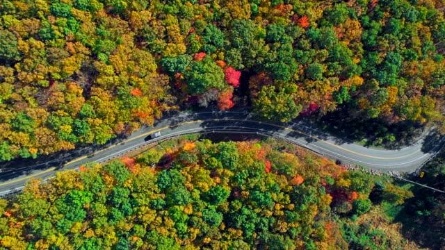 トップ ビューで山林の道アパラチア山脈、ポコノス、ペンシルバニア州、秋の紅葉。空中ドローン ビデオ。