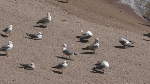 vídeos y material grabado en eventos de stock de the tourist village of lloret de mar beach is seen empty of swimmers but full of seagulls on easter sunday during the coronavirus pandemic on april... - enfermedad contagiosa