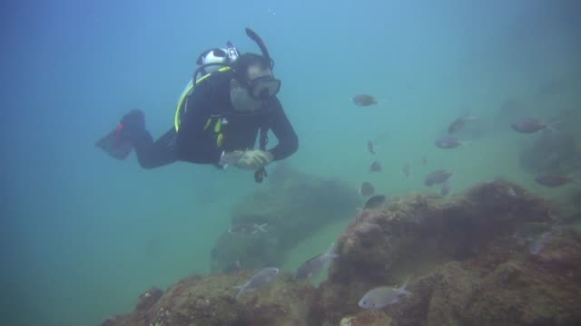 the touristic fishing town of chichiriviche on venezuela's northern coast only two hours from caracas is a popular spot for scuba diving and... - aqualung diving equipment video stock e b–roll