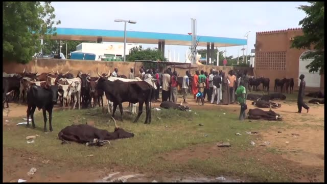 the turkiye diyanet foundation distributes meat to 35,000 people in niamey on august 23, 2018. the foundation's niger coordinator mahmut temelli also... - ニアメ点の映像素材/bロール