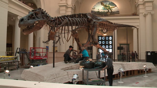 vídeos y material grabado en eventos de stock de wgn sue the tyrannosaurus rex skeleton on display at the chicago field museum on february 5 being dismantled in stanley field hall to be moved... - museo de historia natural museo
