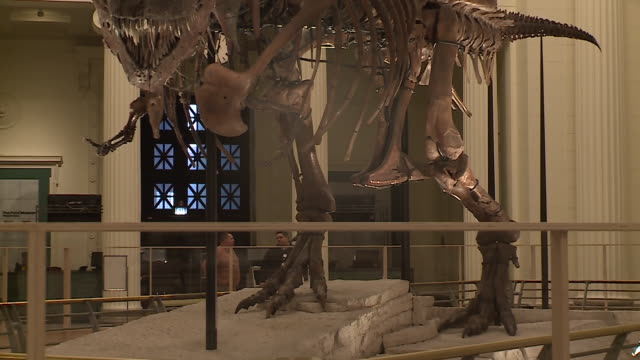 WGN SUE the Tyrannosaurus rex skeleton on display at the Chicago Field Museum on February 5 being dismantled in Stanley Field Hall to be moved...