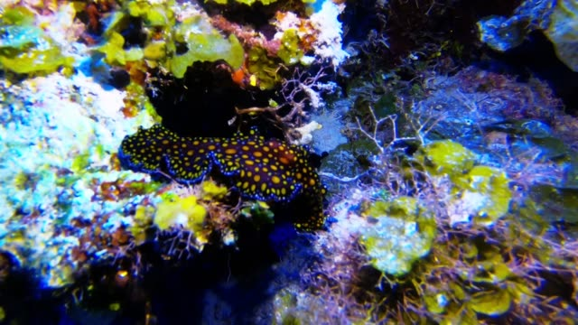 the underwater world is beautiful and alluring. the vibrant colors and the peaceful serenity create a realm of wonder and tranquility. the mysterious... - working animals stock videos & royalty-free footage