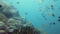 The underwater world of a coral reef. Leyte, Philippines