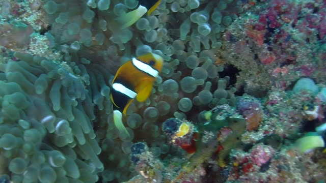 the underwater world of raja ampat, west papua, indonesia. - 40 o più secondi video stock e b–roll