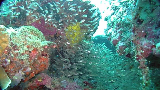 The Underwater world of Raja Ampat, West Papua, Indonesia.