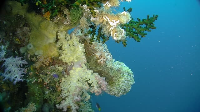 The Underwater world of Raja Ampat, West Papua, Indonesia.