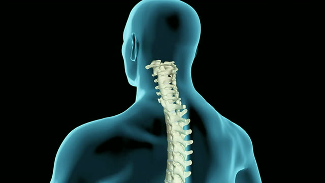 the vertebral column - lumbar vertebra stock videos & royalty-free footage