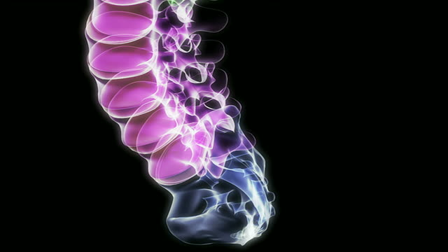 the vertebral column - biomedical illustration stock videos & royalty-free footage