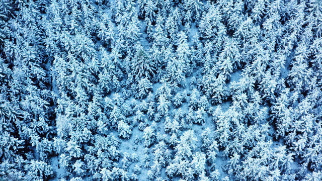 the view from a drone descending over fir trees covered in snow in dumfries and galloway south west scotland - woodland stock videos & royalty-free footage