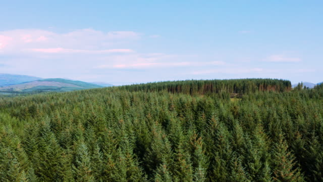 the view from a drone of an area of pine forest in rural dumfries and galloway, south west scotland - pine stock videos & royalty-free footage