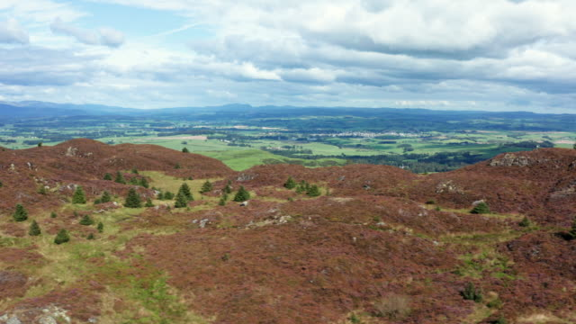 the view from a drone of scottish countryside as it is flown along the top of a hill in early morning summer sunlight - johnfscott stock videos & royalty-free footage