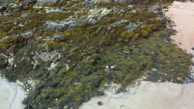 the view from a drone of seaweed on rocks at low tide on a beach in dumfries and galloway - low tide stock videos & royalty-free footage