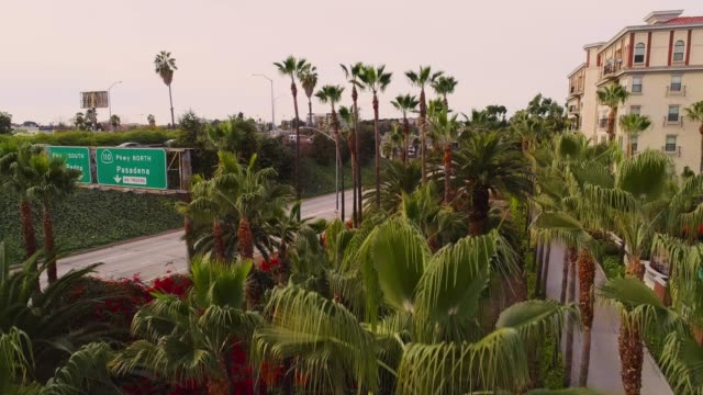 the view of the highway over the palm trees - palm tree stock videos & royalty-free footage